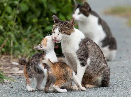 Семейка