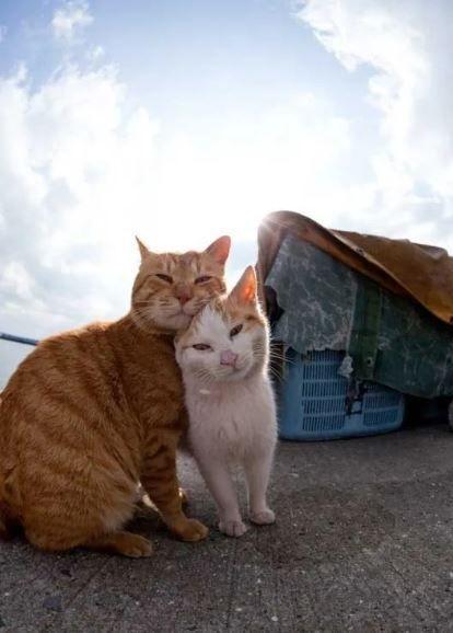 Кошки на острове