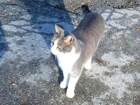Дорога кота на могилу хозяина