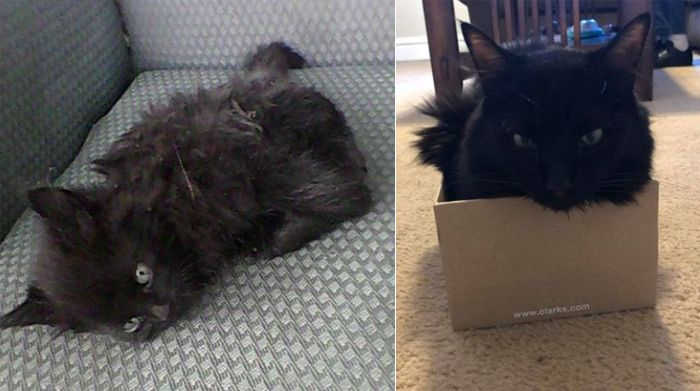 Линкольн до и после