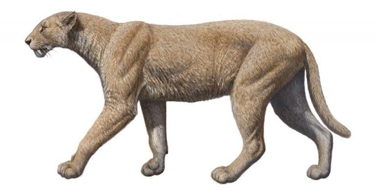 Саблезубая кошка