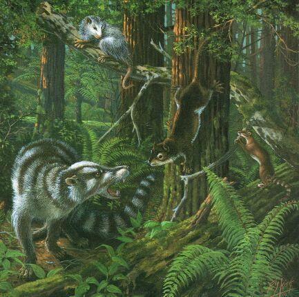 Миацид в лесу