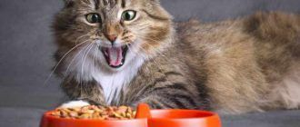 Кошка выбирает корм