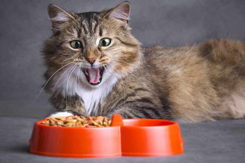 Какой корм выбрать для кошки что важно учесть