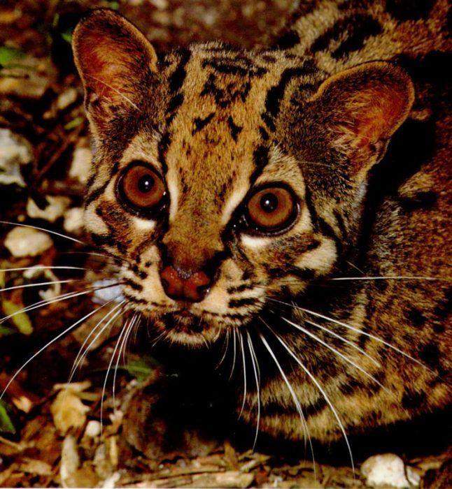 Мраморный кот маскируется