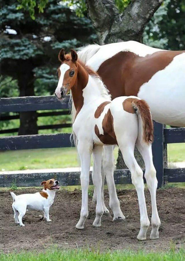 Два животных