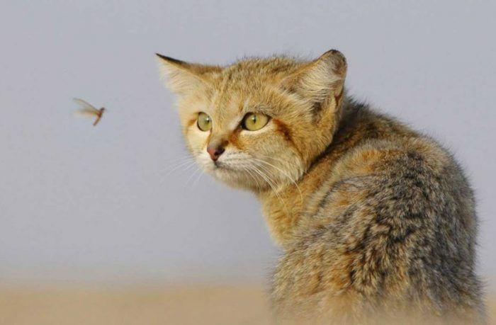 Кот охотится за насекомым