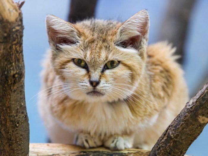 Пушистый котик