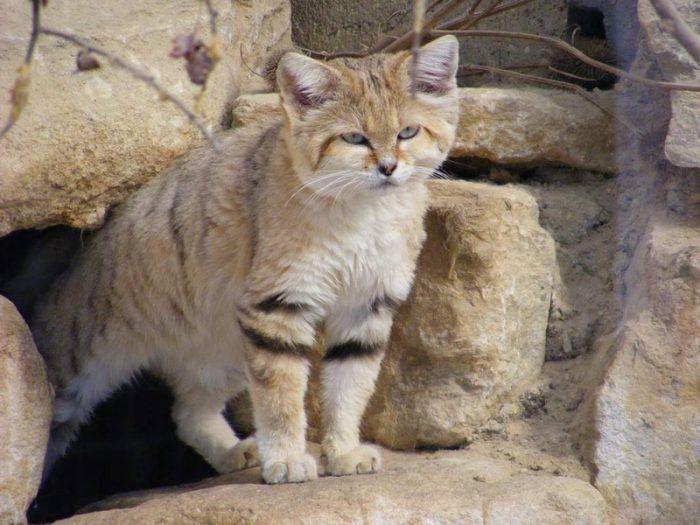 Кот среди камней