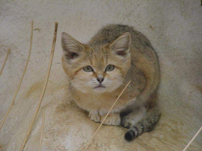Котик настороженно ждет