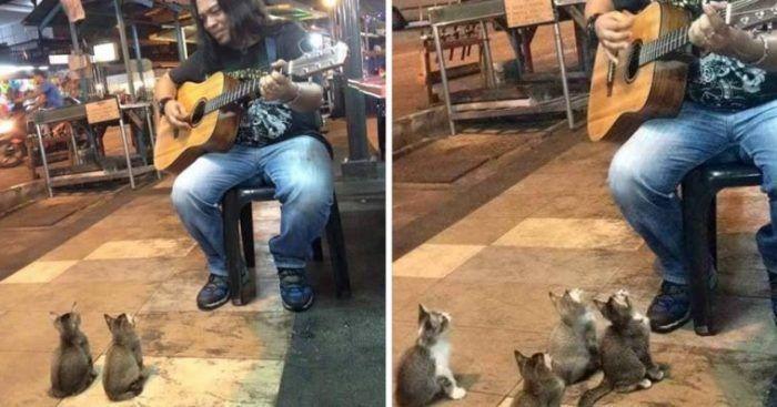 Уличный певец и котята