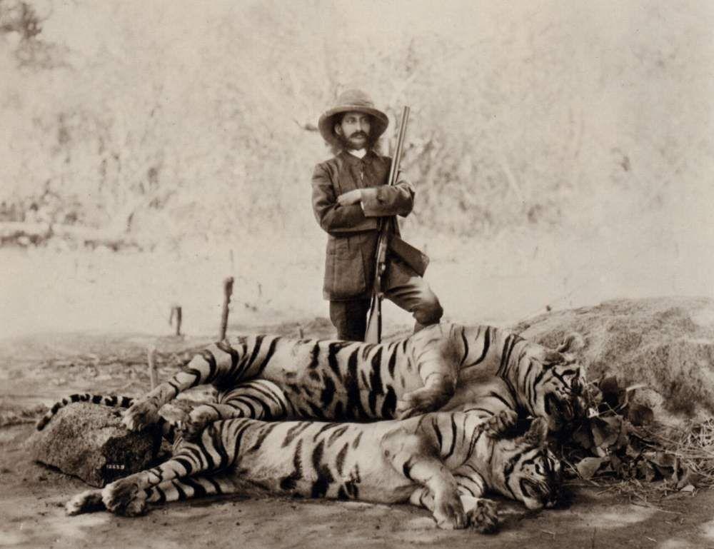 Тигры-людоеды, фото | 769x1000