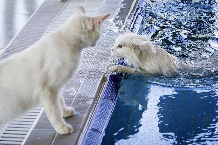 Любители поплавать