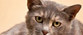 Грустные глаза кошечки