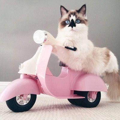 Любимый скутер