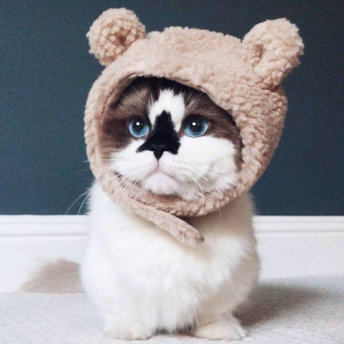 Любимая шапка