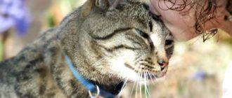 Любовь кошки и человека
