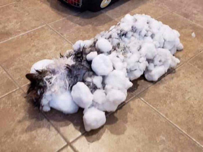 Кошечка в снегу
