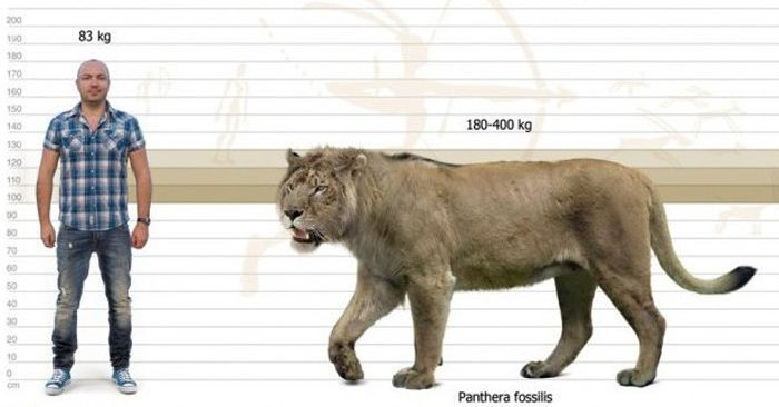 Panthera leo fossilis лев