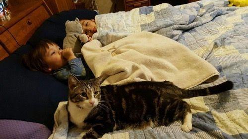 Кот и девочки