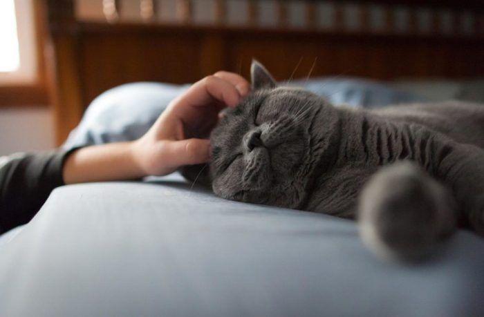 Кошки любят ласку