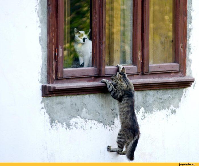 Трюки кота