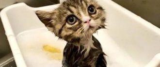 Котик в ванночке