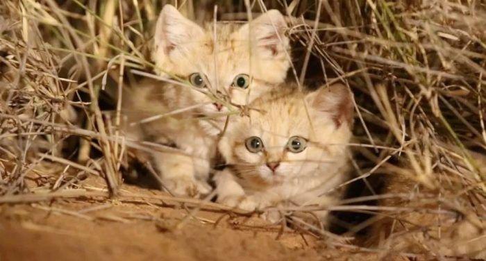 Любопытные котята