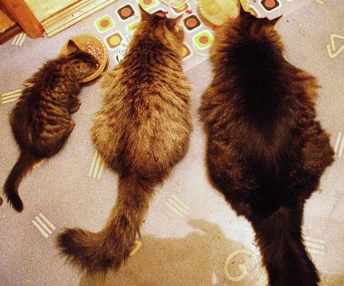 Семейка котов