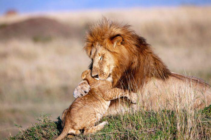 Лев со своим детенышем