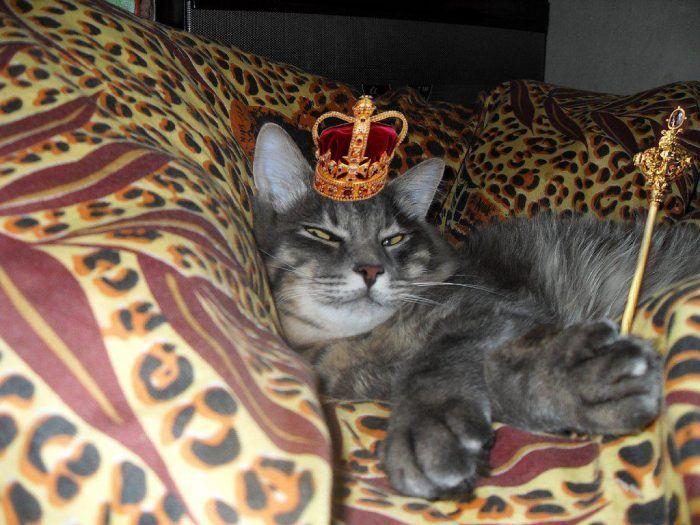 Вальяжный царственный кот