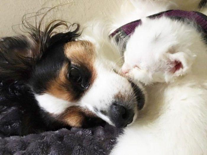 Заботливая собака