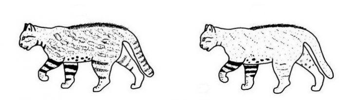 Рисунки на шерсти