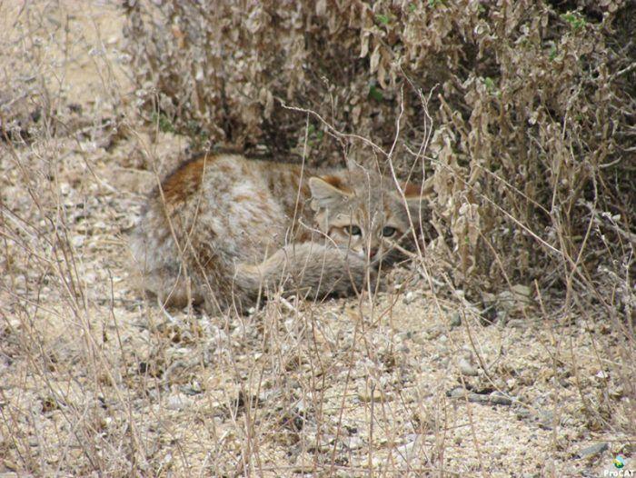 Кошка маскируется в окружающей среде