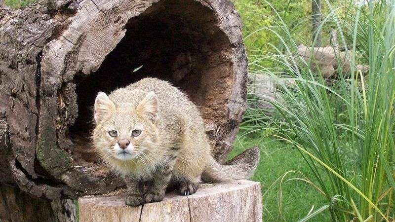 Травяная кошка на пеньке