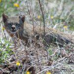 Кошка прячется в сухой траве