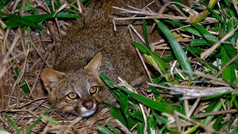 Кошка лежит в зеленой траве