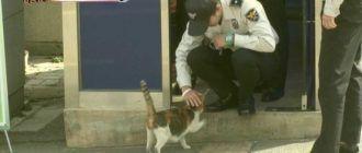 Кошка и полиция