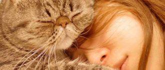 Коты требуют любви и внимания