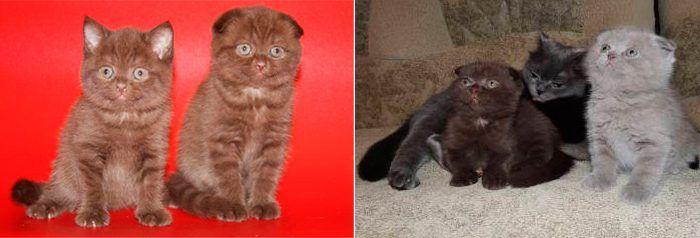 Котята разные