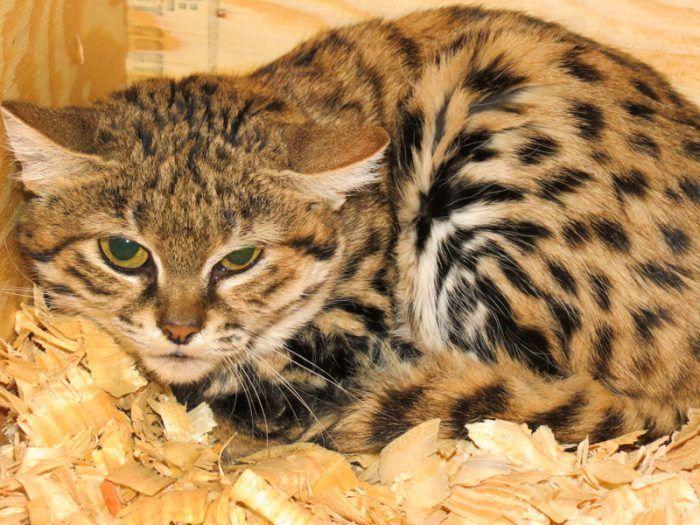Кот спрятался в будке