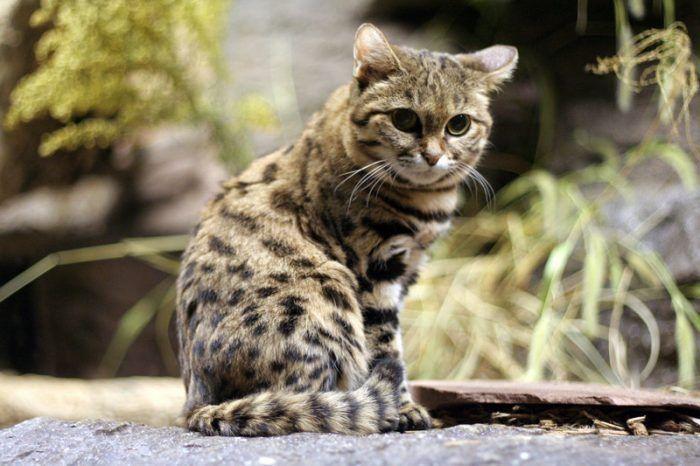 Красивый и грациозный кот