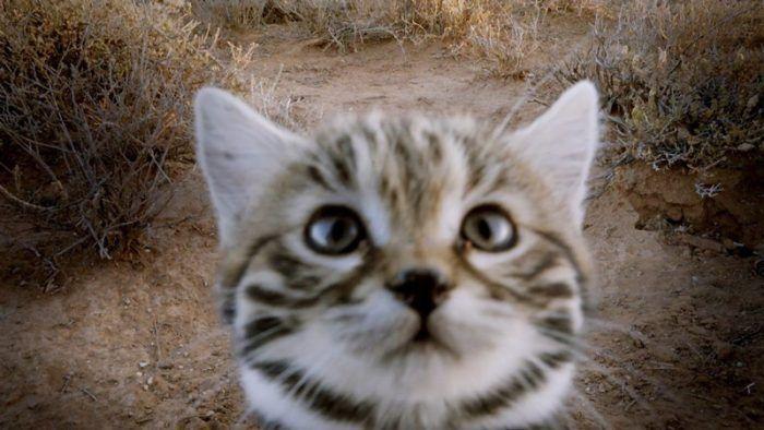 Котенок смотрит в камеру