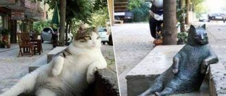 Кот и скульптура