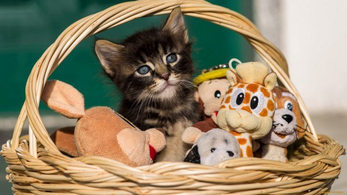 Котики игрушки