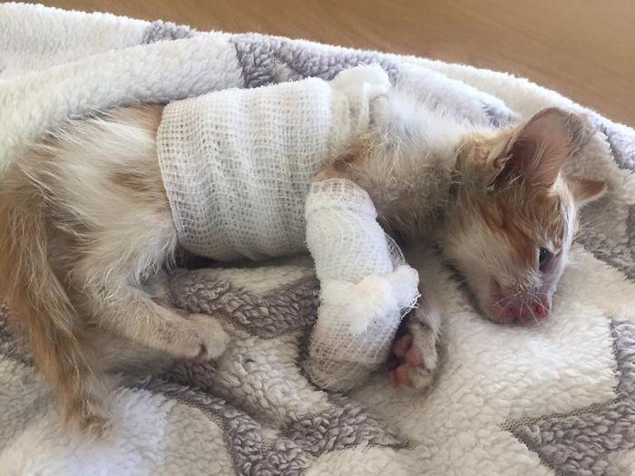 Котик пострадал