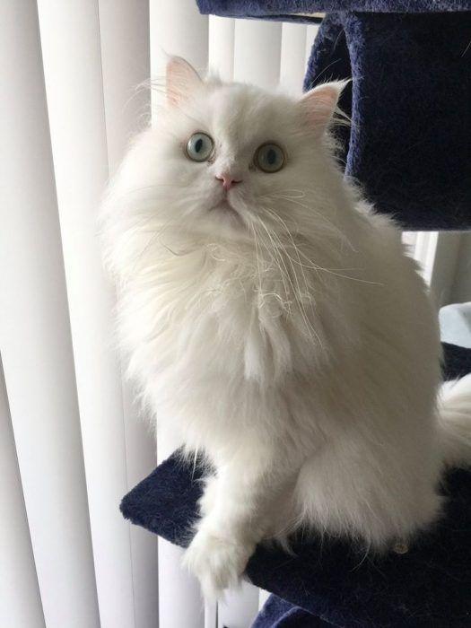 Котик выздоровел