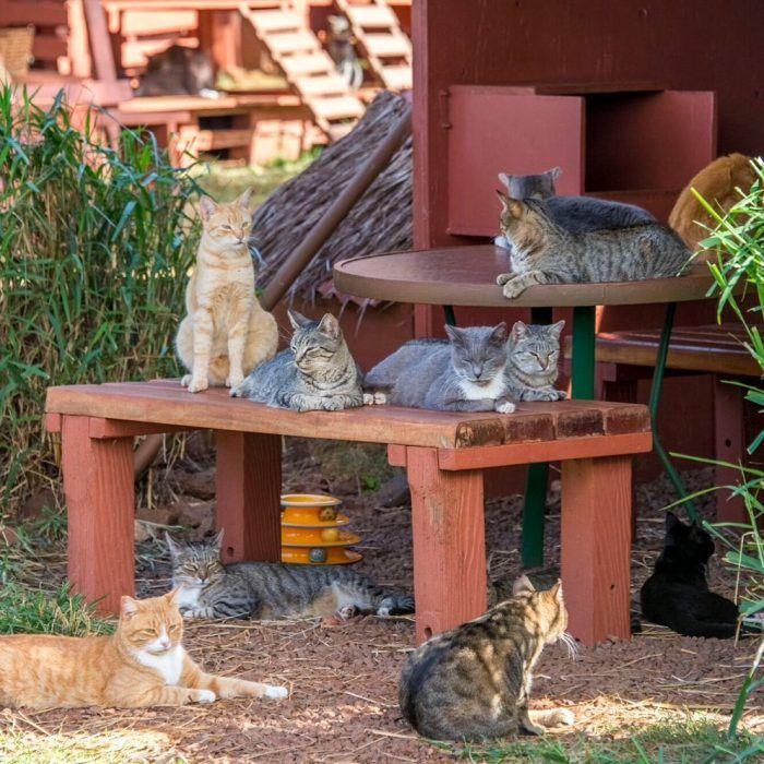 Разномастные кошки