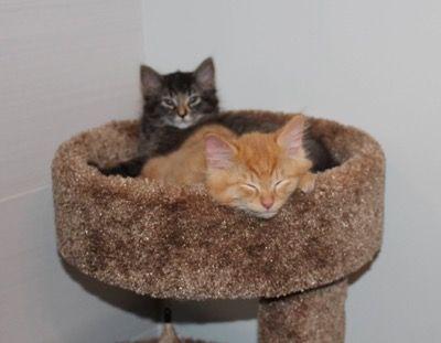Любимая кроватка