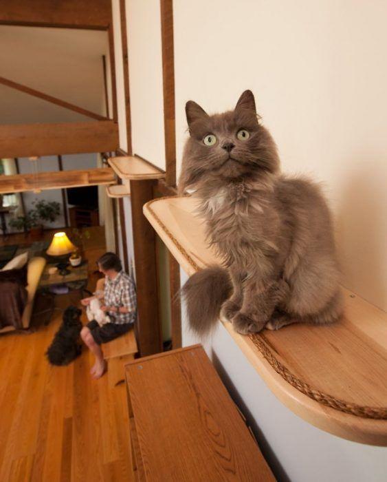 Шоссе для кошек